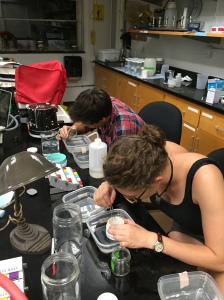 Student researchers Matt Warren (above) and Ellie Stapylton sorting BRS for use in fish feeding experiments. Photo credit: Brent Boscarino.